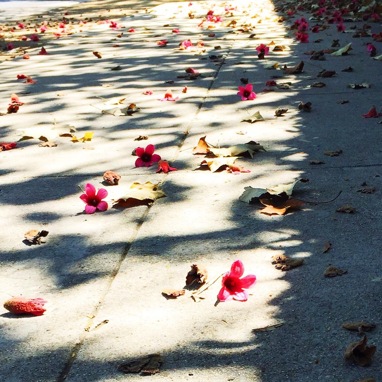 pink flowers on the sidewalk
